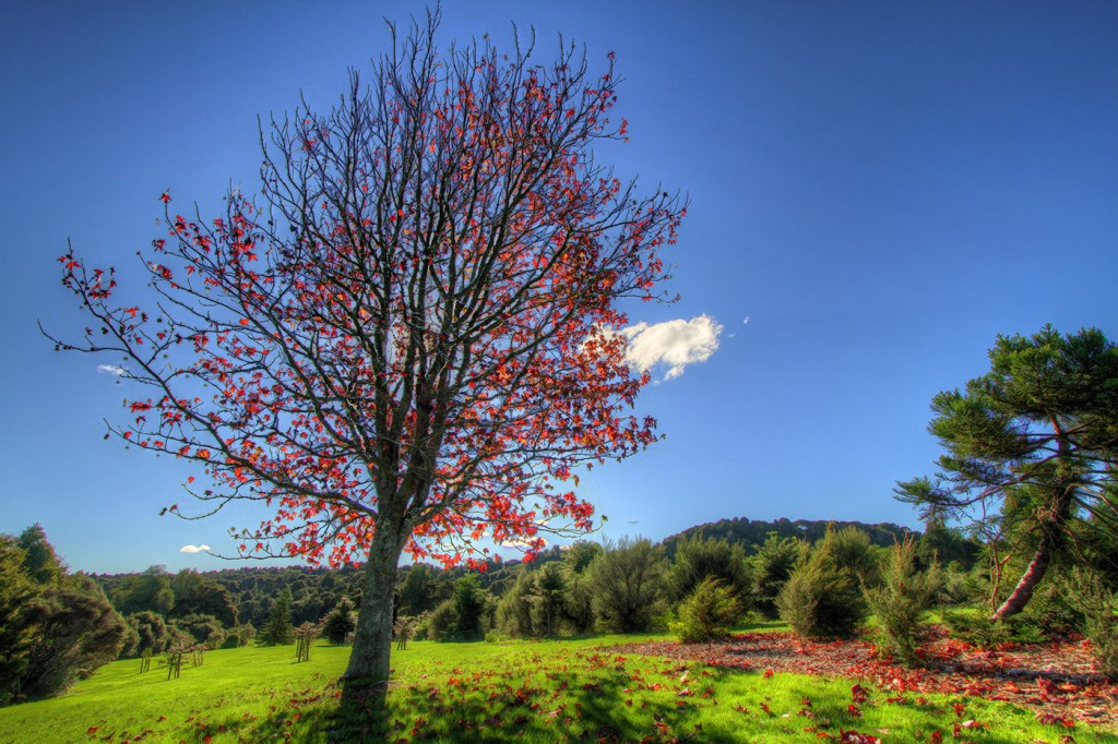 New Zealand In Hdr
